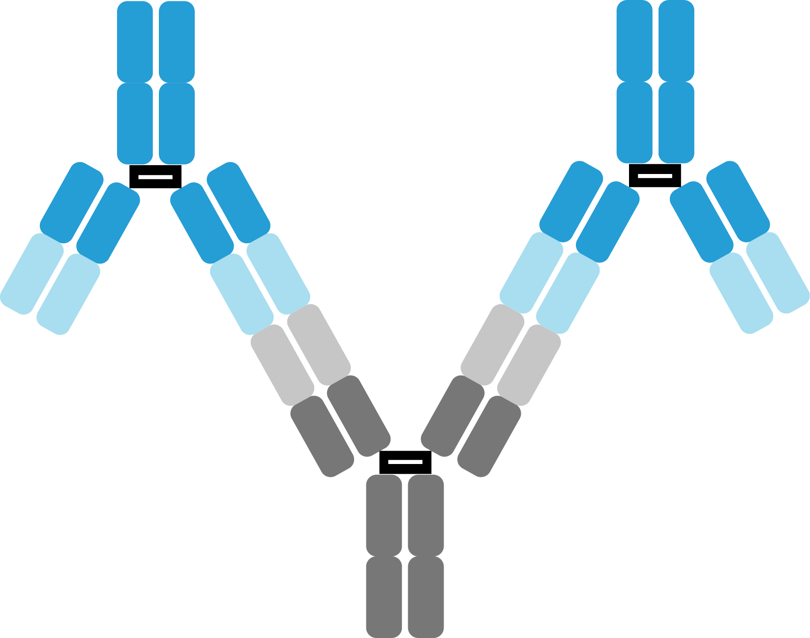 Anti-Idiotypic Antibody Development